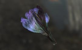 Wild Tato Flower