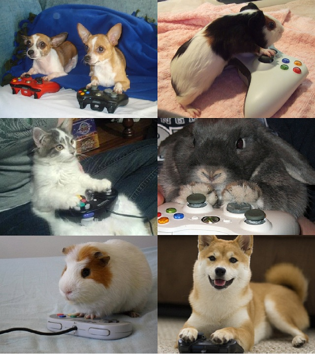 gaminganimals